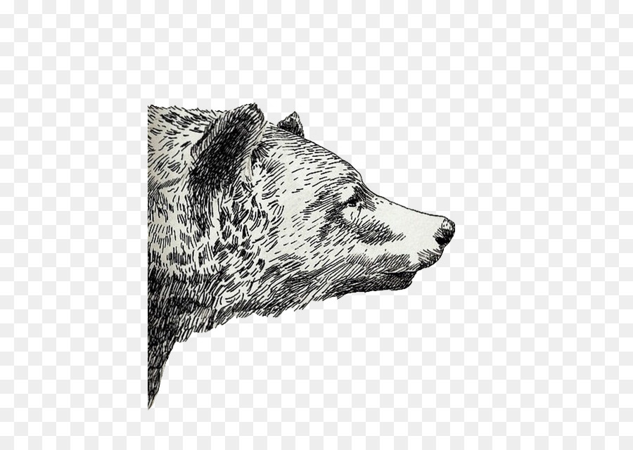 Drawing Grizzly Bear Sketch Overlay Tumblr Png Download 480 639