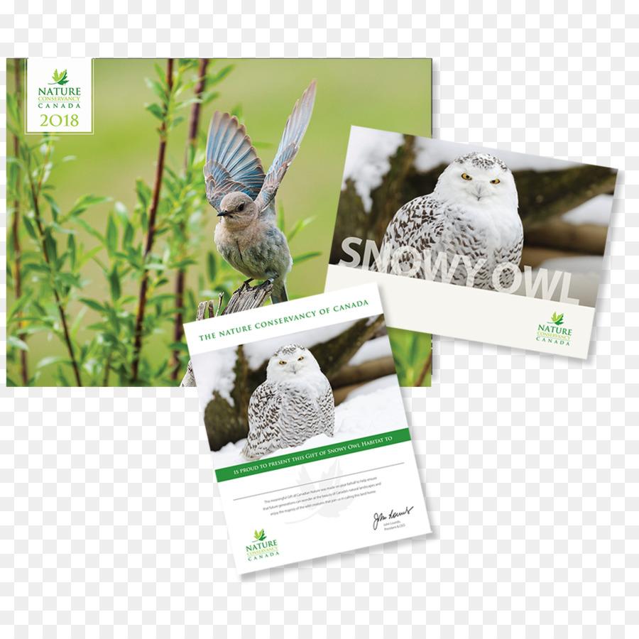 Bird Of Prey Bald Eagle Owl Gift Bird Png Download 10241024