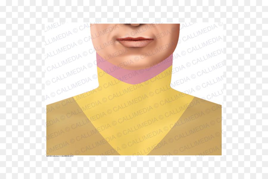 Cuello - dermatoma png dibujo - Transparente png dibujo Amarillo png ...