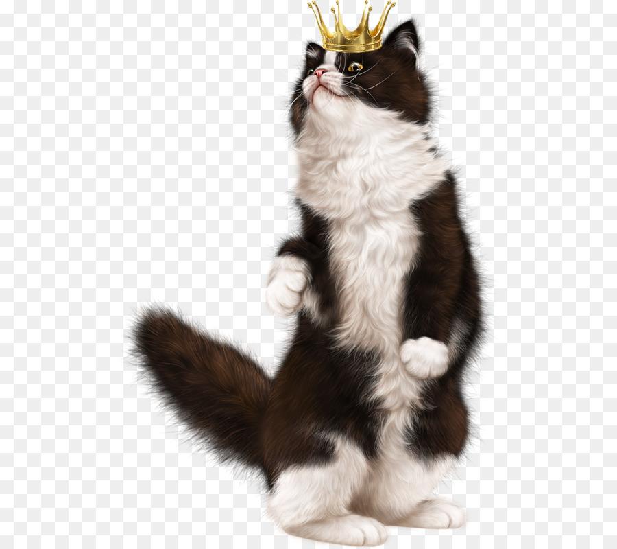 Kitten American Wirehair European shorthair Whiskers Norwegian ...