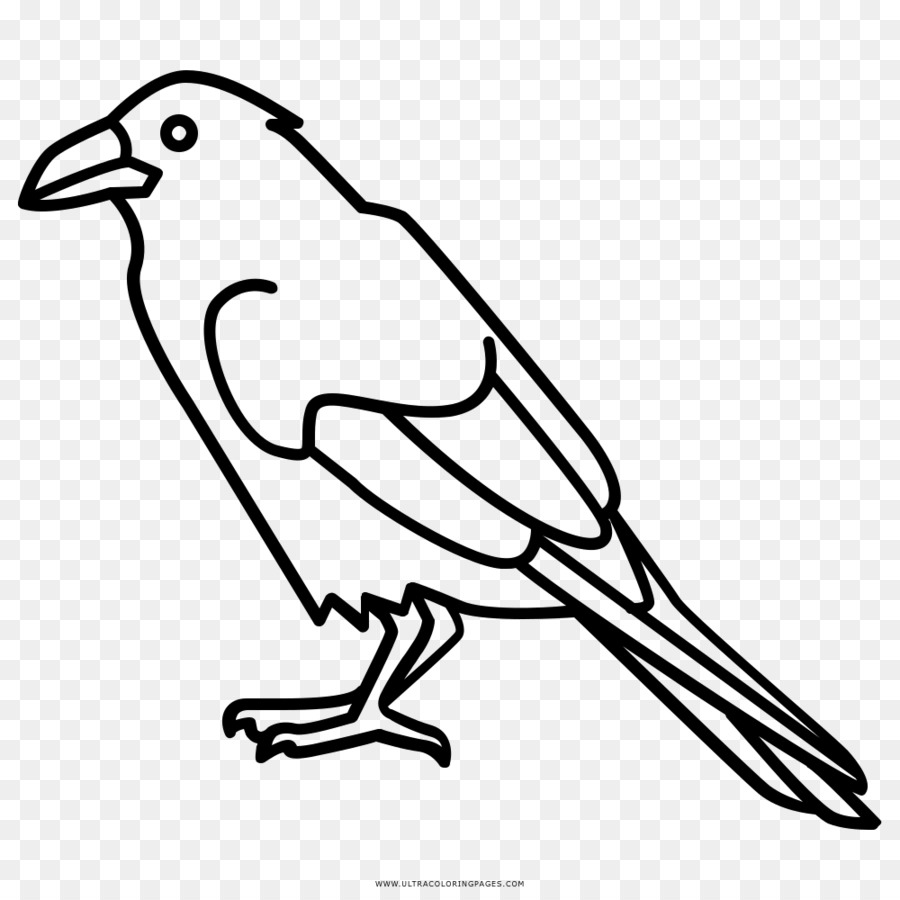 Coloring book Common raven Drawing Songbird - Bird png download ...