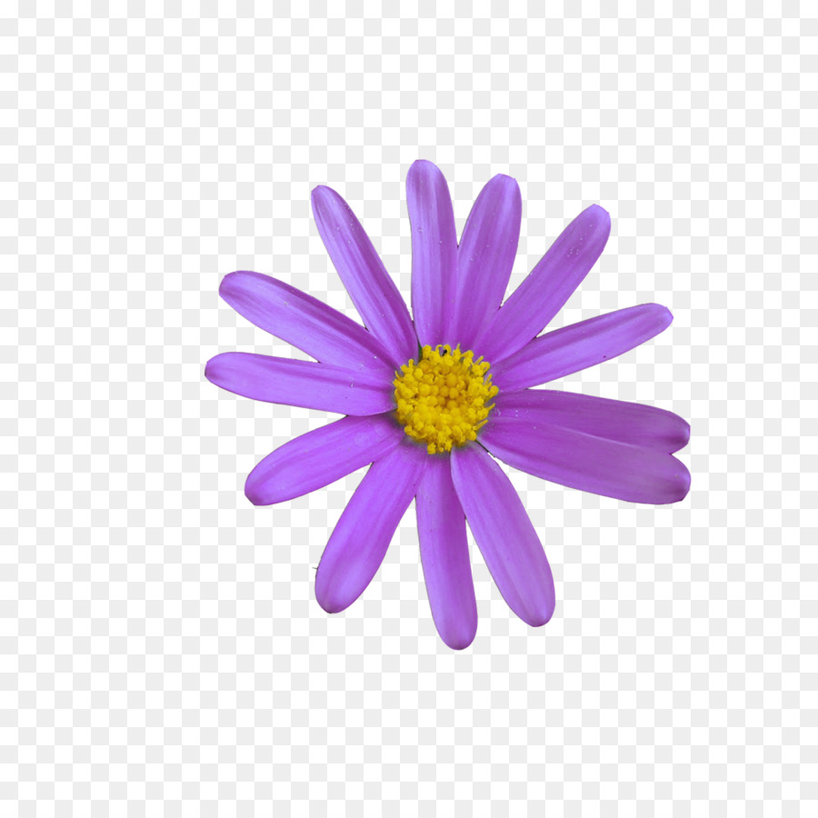 Communication web page business emoji meaning flower corel png communication web page business emoji meaning flower corel izmirmasajfo