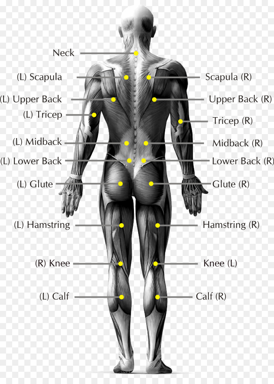 Pain in spine Low back pain Human body Human back Anatomy - Body ...