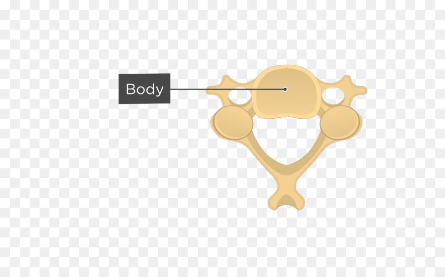 Articular Processes Cervical Vertebrae Vertebral Column Anatomy