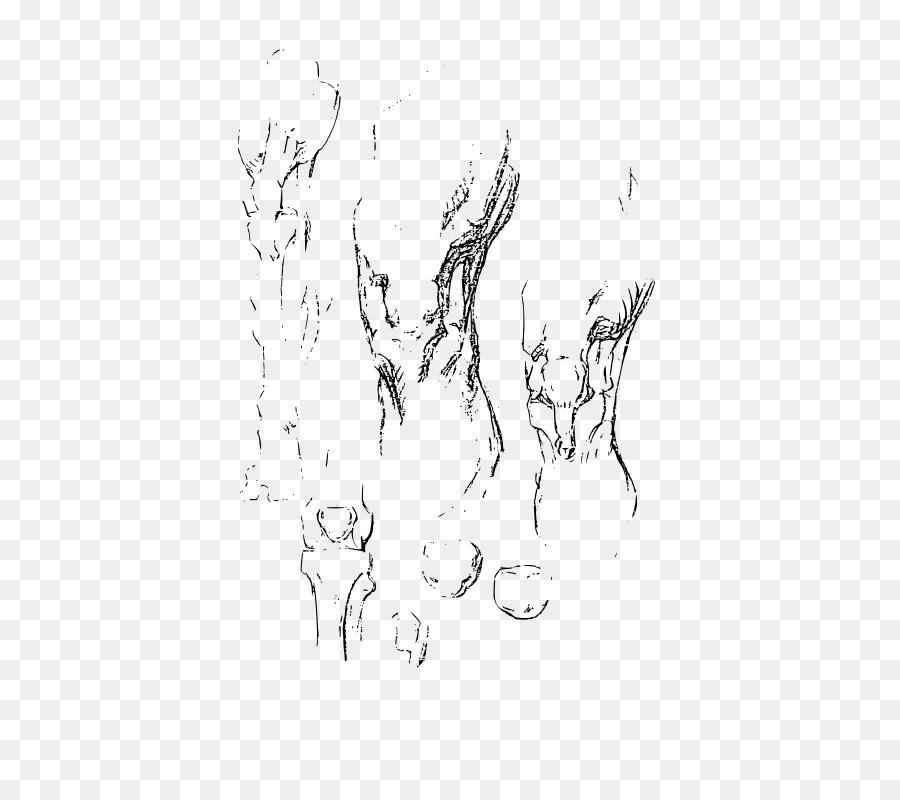 Constructive anatomy Drawing Knee Sketch - animal anatomy sketches ...