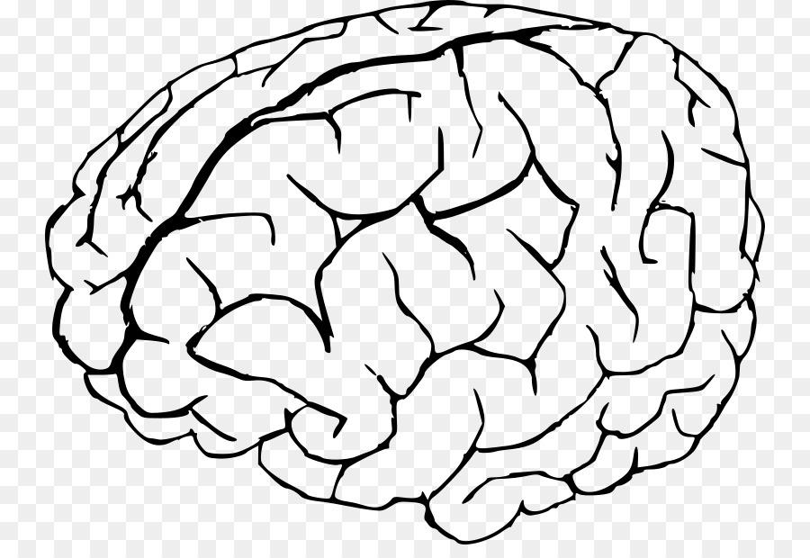 Libro para colorear de la Anatomía del cerebro Humano - Cerebro png ...