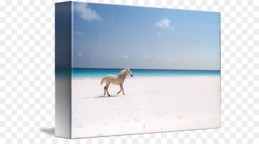 Caballo camilla Marcos de fotos de la Lona del Mar - caballo en la ...