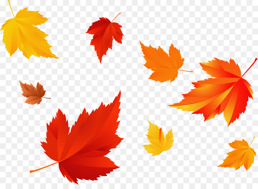 autumn leaf color photography season fall season png download