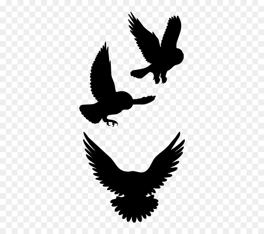 Unduh 78+ Foto Gambar Burung Elang Kartun  Paling Keren