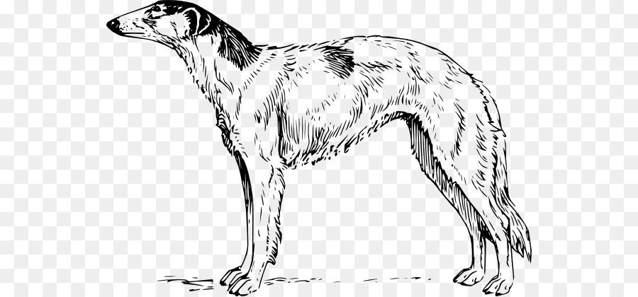 Labrador Retriever Cachorro Beagle Golden Retriever Whippet Perro