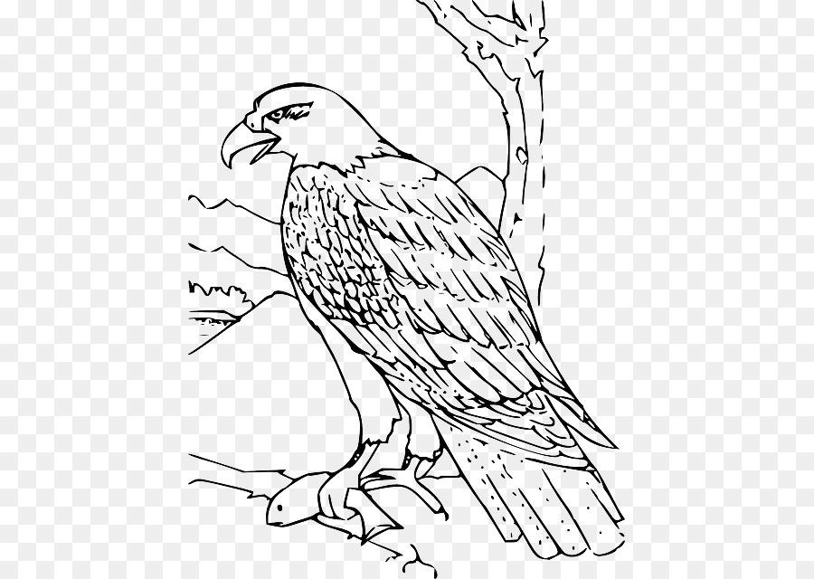 Águila calva libro para Colorear, Dibujo de - pintado a mano de ...