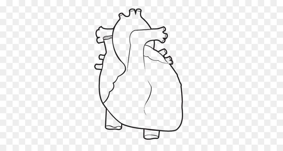 Libro para colorear de la Anatomía del Corazón Humano, cuerpo - los ...