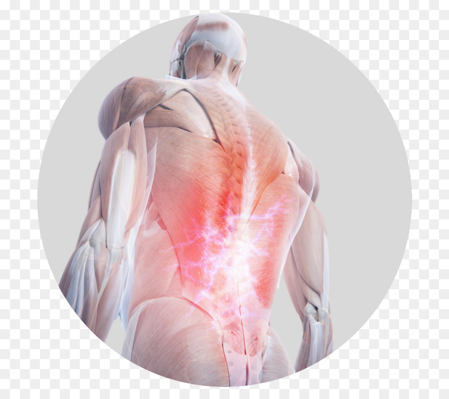 Pain in spine Human back Human anatomy Human body - back pain png ...