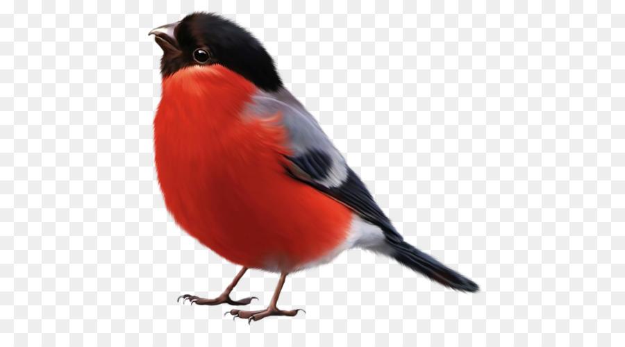 Pájaro Penguin Dibujo de Arte para Colorear libro - Aves png dibujo ...