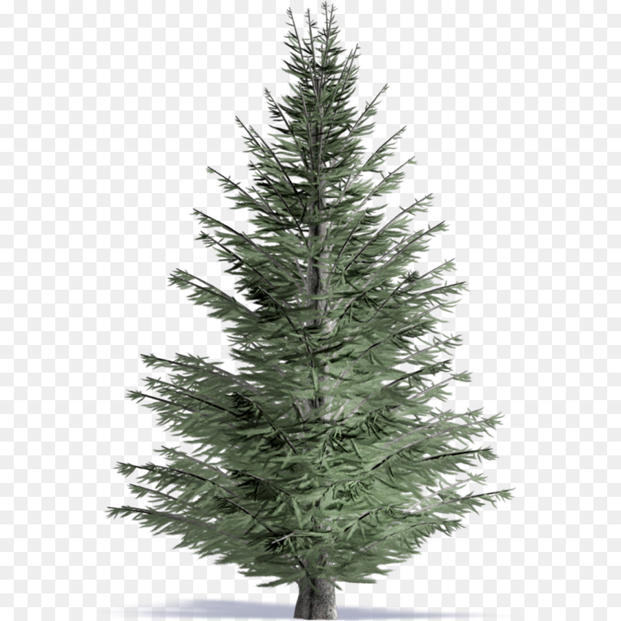 Pine Tree Fraser fir Drawing Clip art - tree png download - 1000 ...