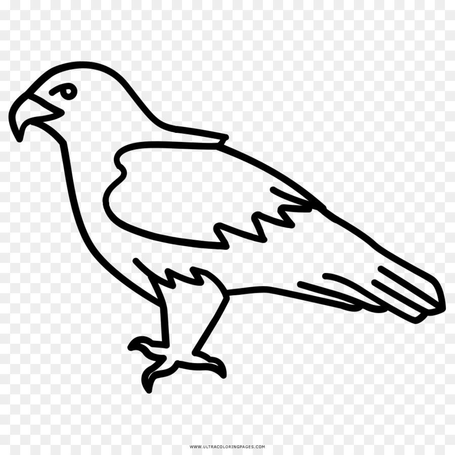 Águila calva de Aves de Dibujo Clip art - Aves Formatos De Archivo ...