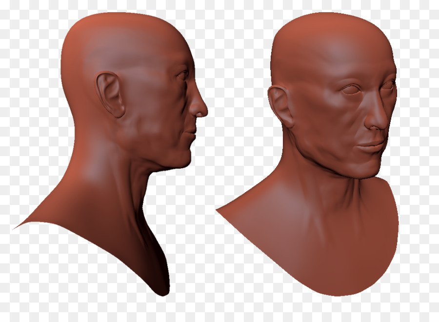 Chin Friagram Head and neck anatomy Cheek Forehead - pinched face ...