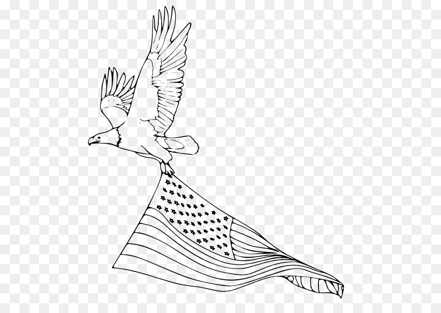 Águila calva libro para Colorear de Aves de Estados unidos - águila ...