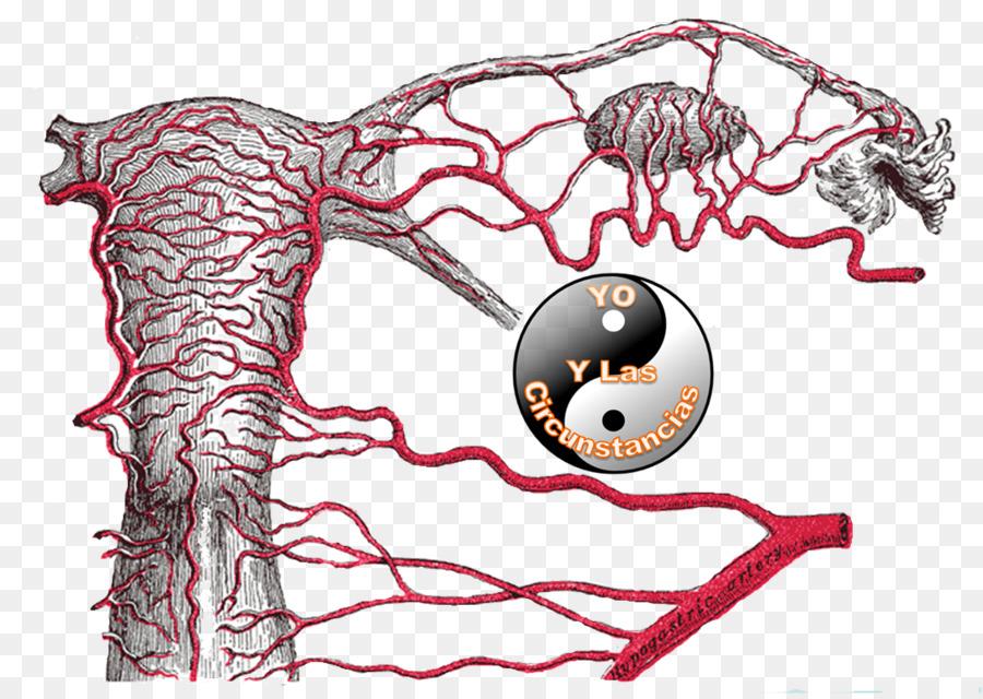 Ligamento redondo del útero de la arteria Uterina arteria ilíaca ...