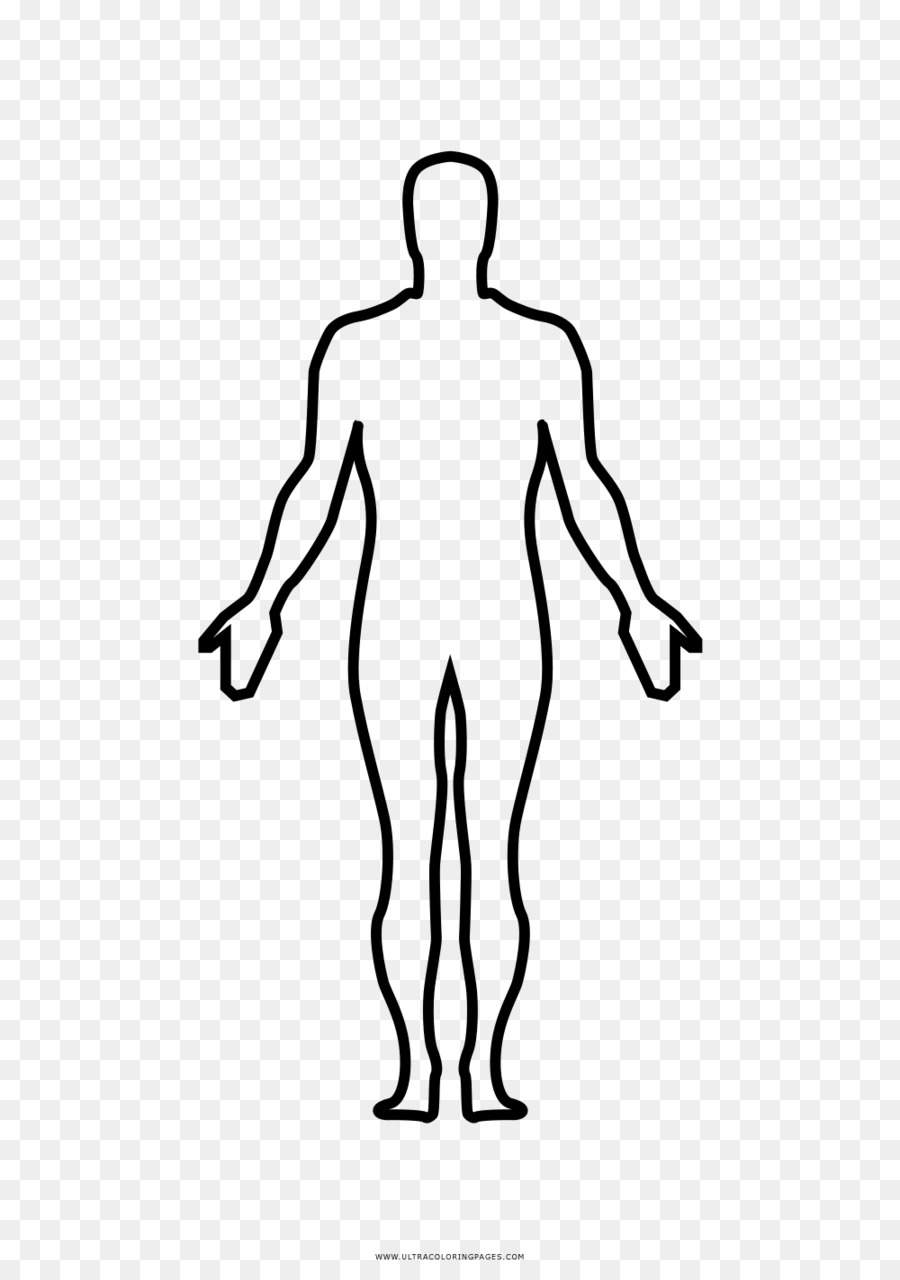 Thumb Homo sapiens Human body Anatomy Drawing - humano png download ...