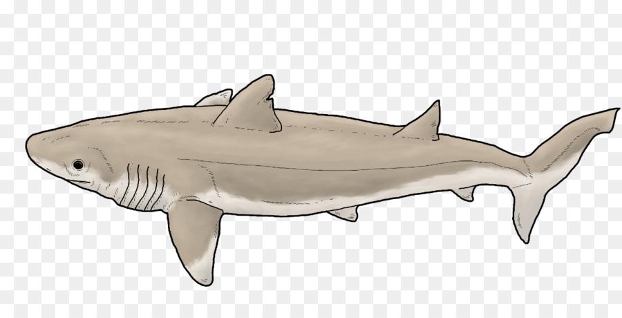 Tiger shark Digital art DeviantArt - shark Formatos De Archivo De ...