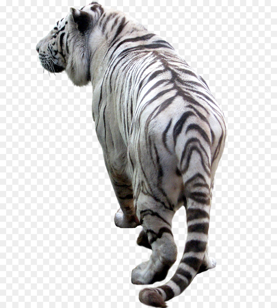 Tiger Desktop Wallpaper Clip Art Tiger Png Download 800 1000