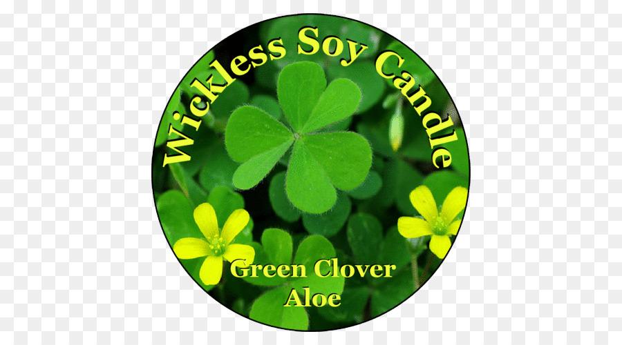Shamrock Flower National Symbols Of Ireland The Republic Of Ireland