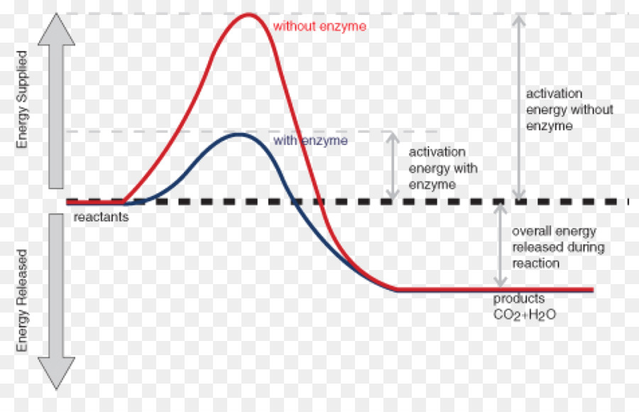Energi aktivasi reaksi kimia enzim reaksi eksotermik reaksi kimia energi aktivasi reaksi kimia enzim reaksi eksotermik reaksi kimia ccuart Choice Image