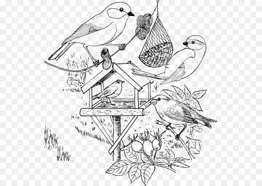 Pájaro Kleurplaat Invierno Europeo robin Penguin - Aves png dibujo ...