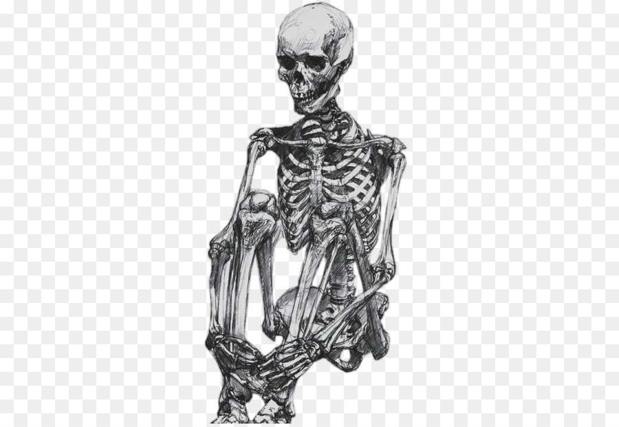 Human Skeleton Drawing Human Body Sketch Skeleton Png Download