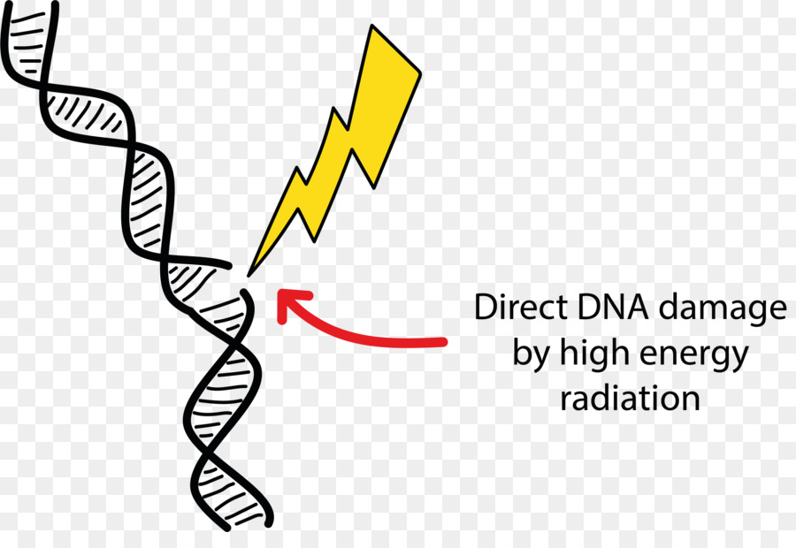 dna damage radiation therapy cell energy png download