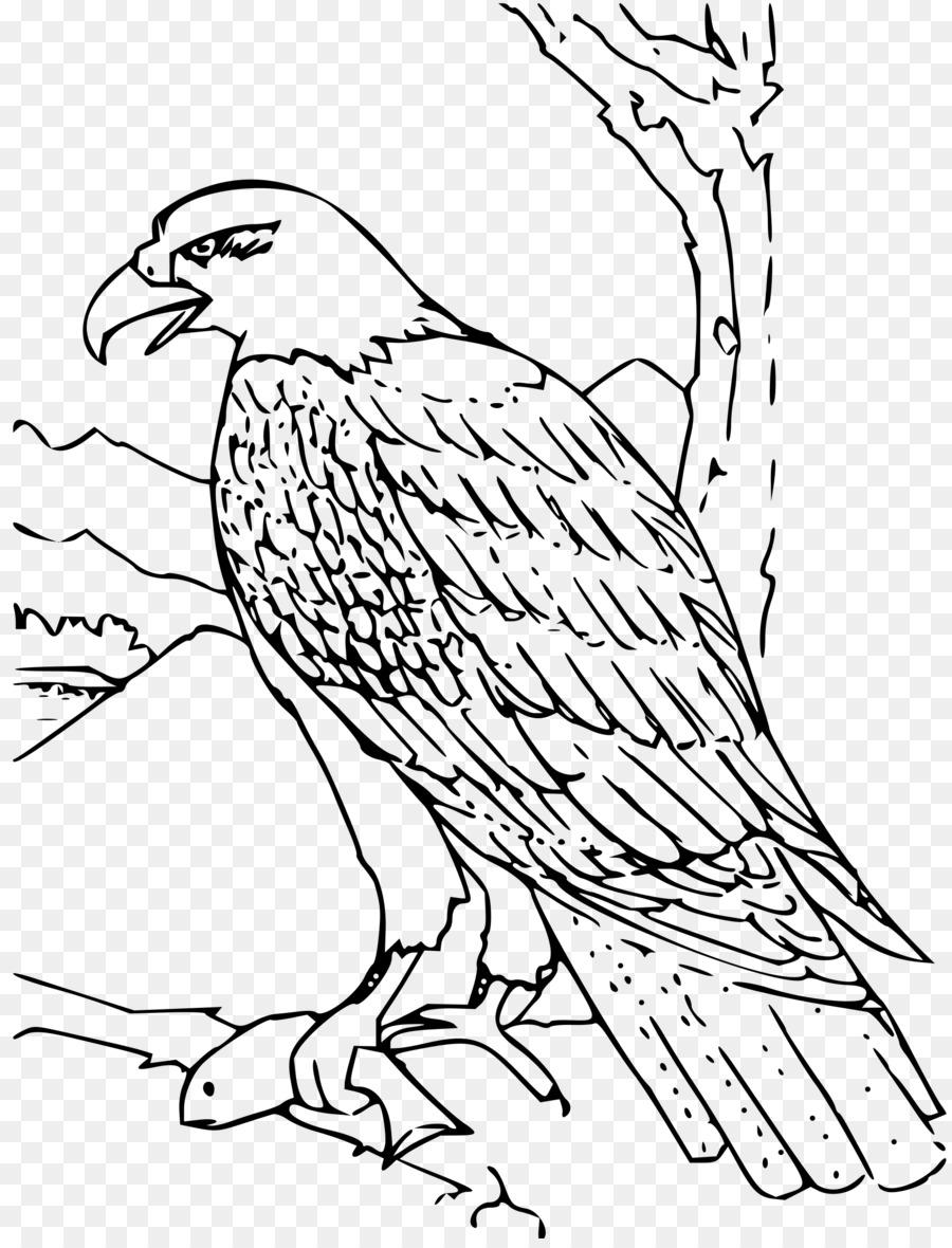 Águila calva libro para Colorear águila de Oro de Aves - águila ...