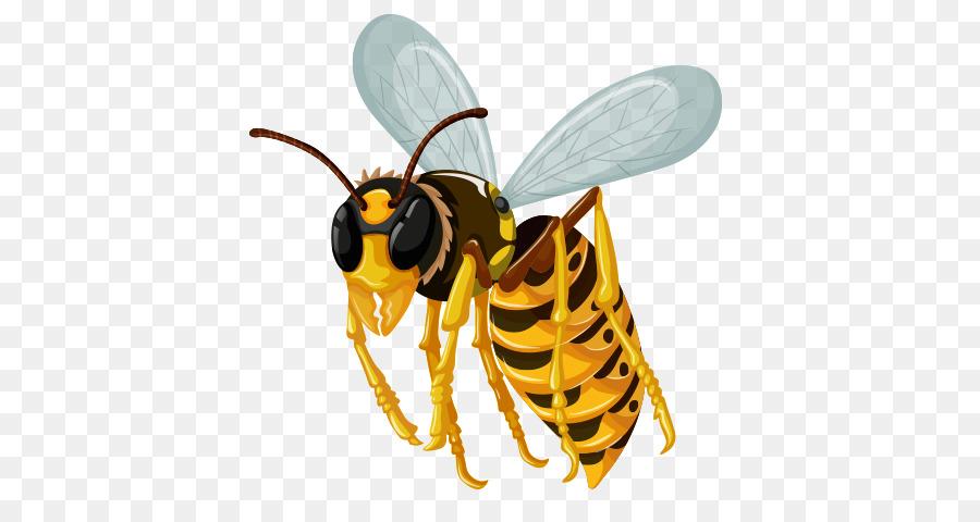 La morfología de los insectos Hornet libre de Regalías - los ...