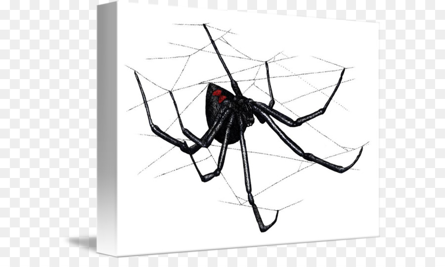 Tela de araña Latrodectus hesperus Sur de la viuda negra - araña png ...