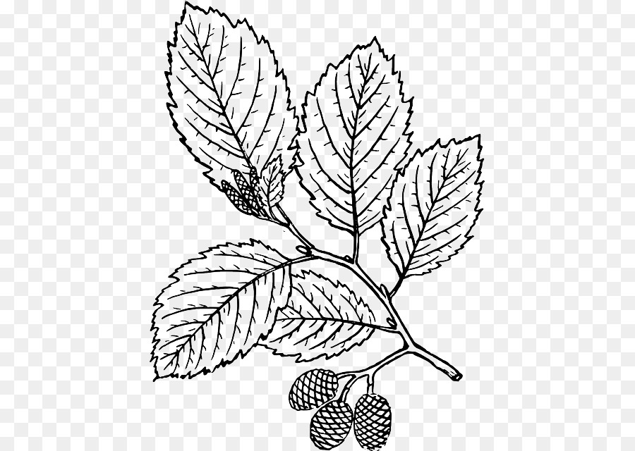 Tree Leaf Coloring book Red alder - tree branch with leaves png ...
