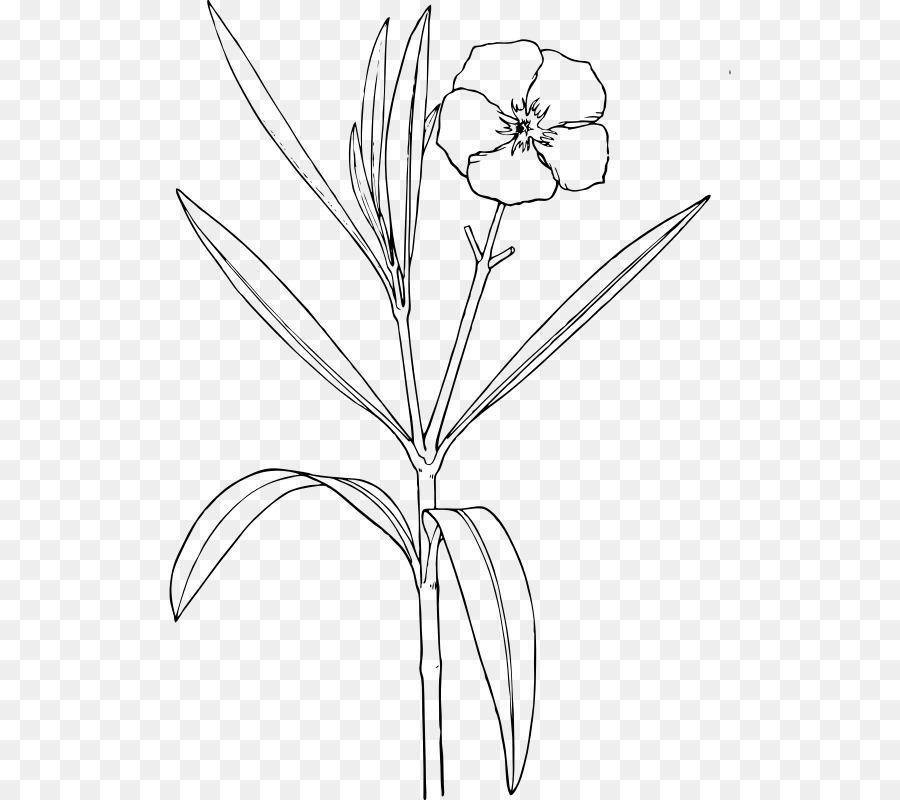 Oleander drawing flower shrub clip art flower png download 562 oleander drawing flower shrub clip art flower mightylinksfo