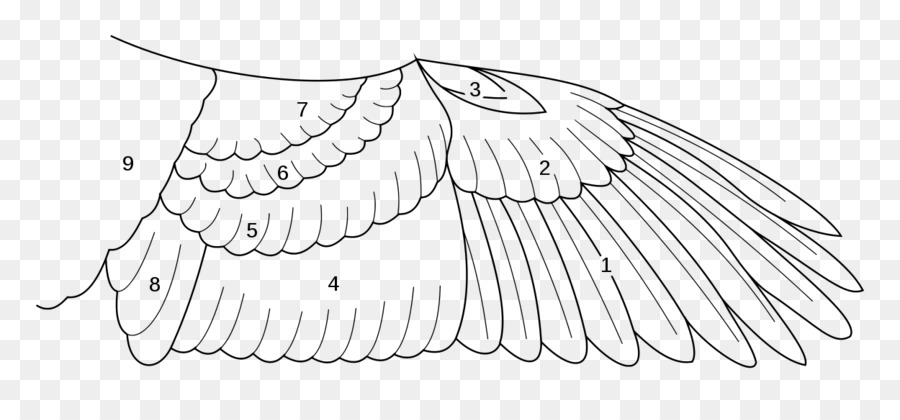 Bird anatomy Archaeopteryx Buffalo wing - Bird png download - 1250 ...