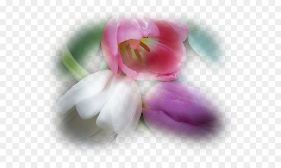 Unduh 610+ Gambar Bunga Ucapan Cinta Gratis
