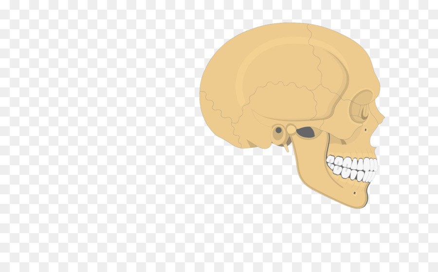 Skull Zygomatic process of temporal bone Nose Frontal process of ...