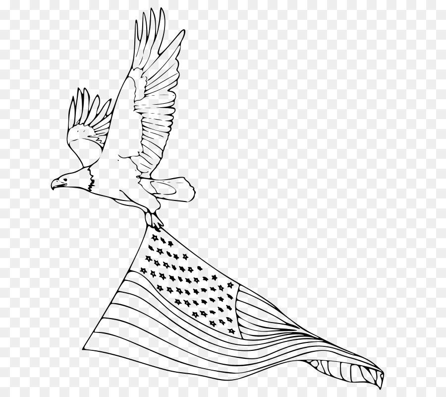 Águila calva libro para Colorear de los Estados unidos - águila png ...