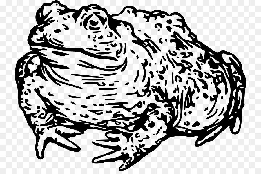 Cat Toad Black And White Frog Clip Art