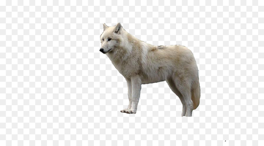 Computer Icons, Arctic Wolf, Desktop Wallpaper, Dog Like Mammal, Dog Breed Group PNG