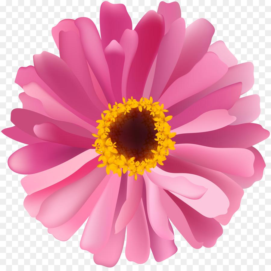 Transvaal Daisy Chrysanthemum Marguerite Daisy Daisy Family Aster