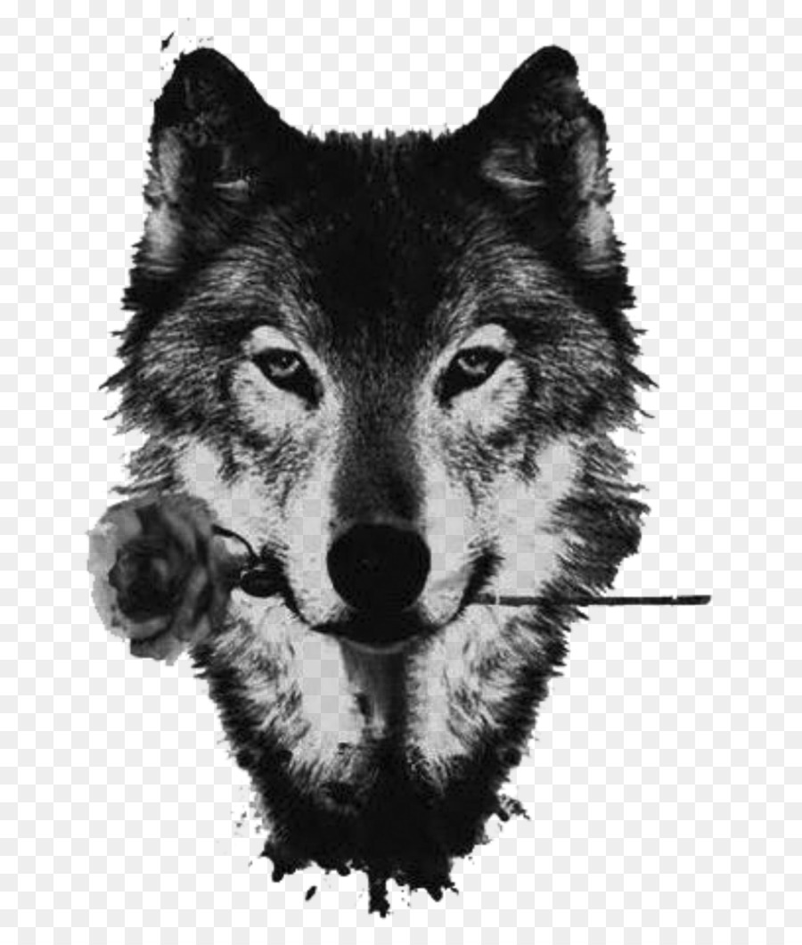 Black Wolf American Pit Bull Terrier Red Wolf Drawing The Wolf And The Fox    Sad Wallpaper