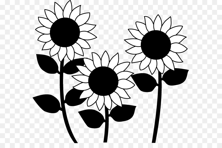 Common Sunflower Black And White Monochrome Painting Design Png