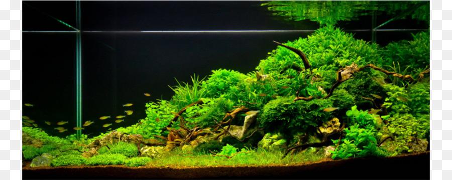 aquariums aquascaping reef aquarium aquarium lighting aquarium