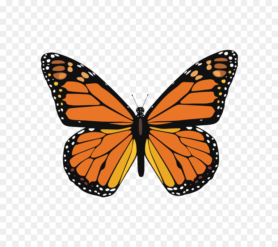 Monarch Butterfly Multiple Sclerosis Clip Art Butterfly Png
