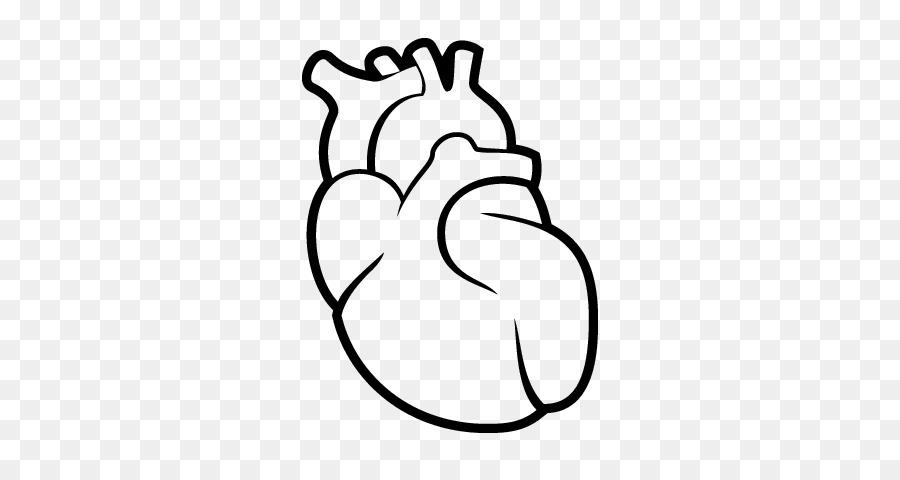 Corazón de Dibujo del sistema Circulatorio del cuerpo Humano ...