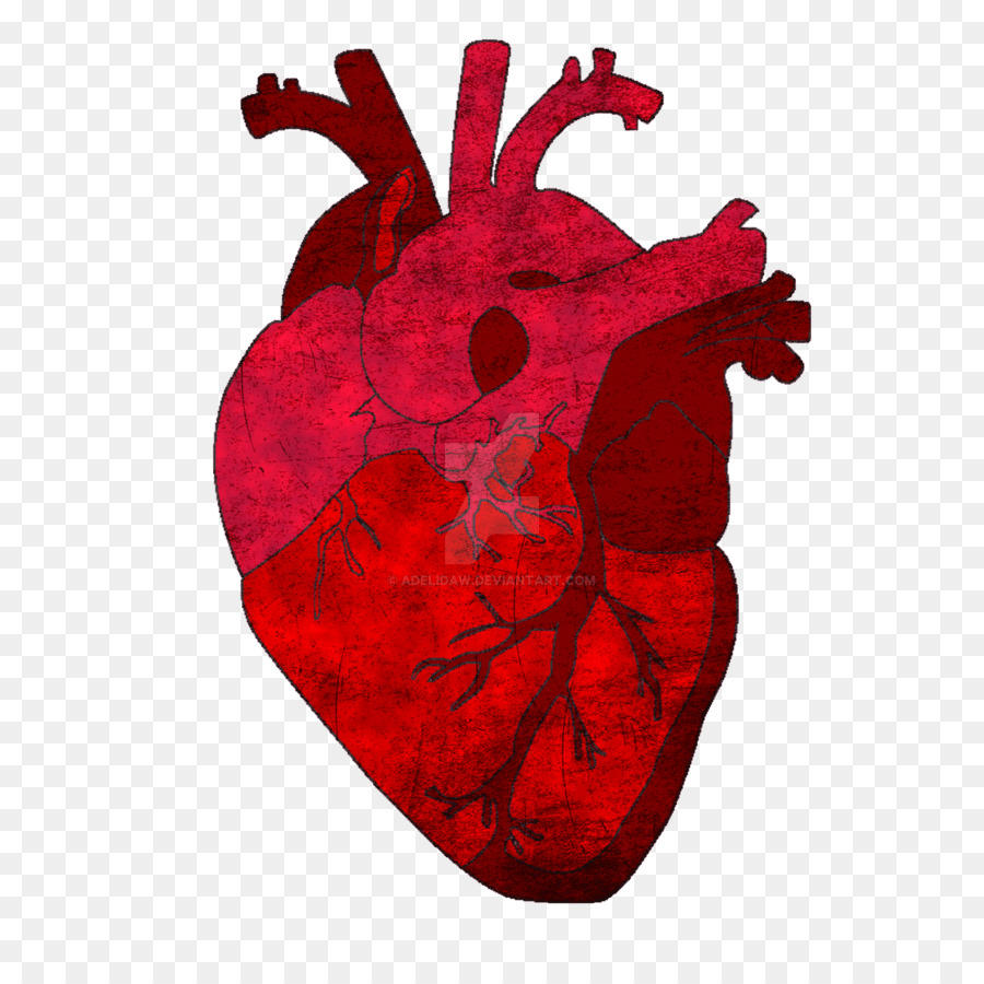 Gray\'s Anatomy Saatchi Art Heart - heart png download - 894*894 ...