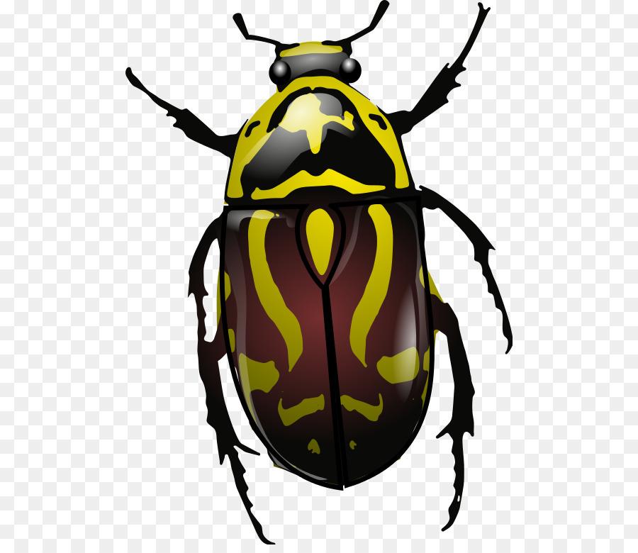 Escarabajo Anatomía Clip art - escarabajo Formatos De Archivo De ...